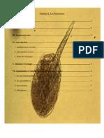 Chapitre II Les Protozoaires