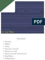 Lab Animals - Kush