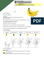 platano_condiciones_agroclimaticas