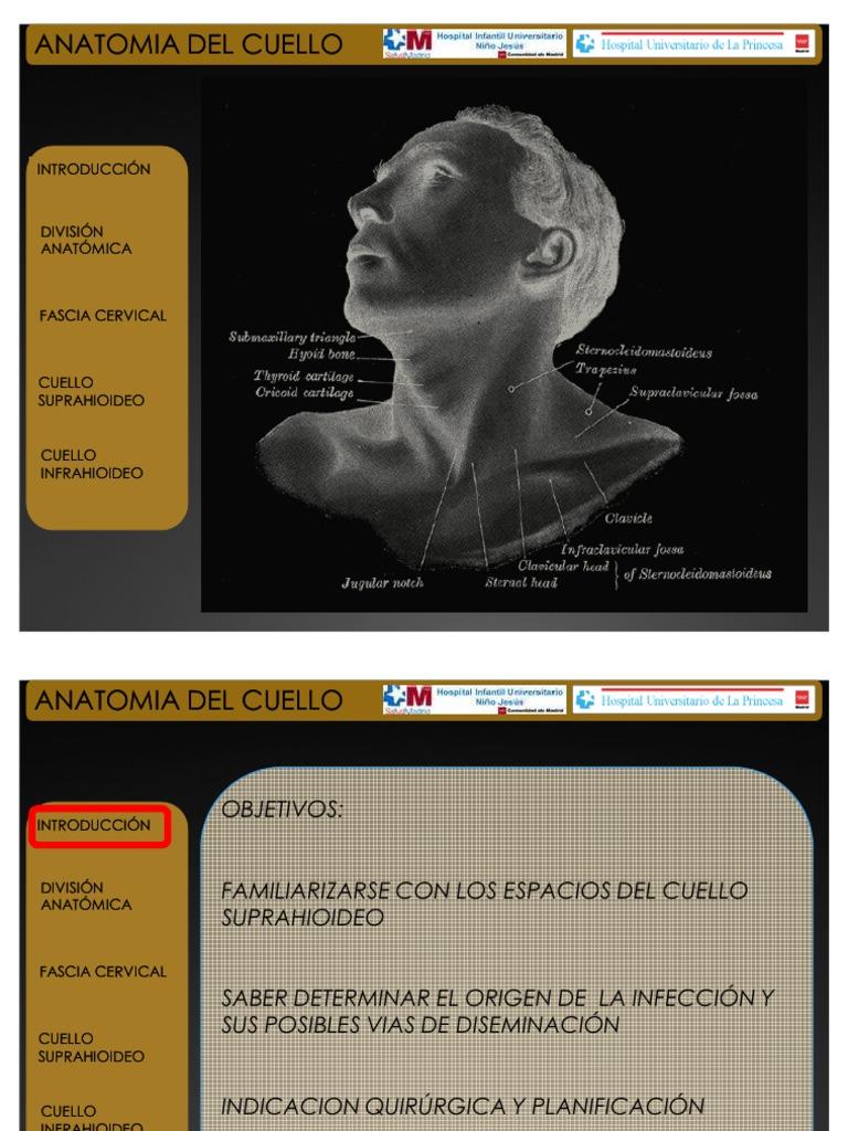 Presentacion Anatomia Del Cuello