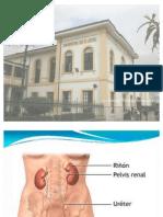 Embriología y anatomía de riñón, uréter  y
