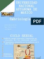 Ciclo Sexual.