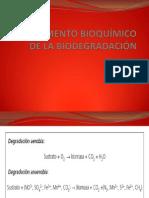 FUNDAMENTO BIOQUÍMICO DE LA BIODEGRADACIÓN