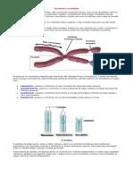 A Carioteca - Trabalho de Biologia