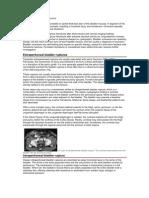 Pathopsysiology Bladder Trauma