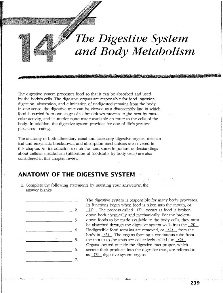 Großartig Anatomy And Physiology Digestive System Study Guide ...