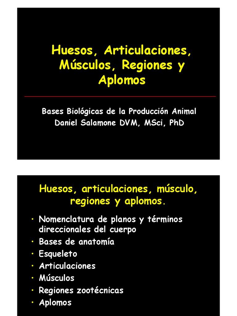 Moderno Términos Direccionales En La Anatomía Imágenes - Imágenes de ...
