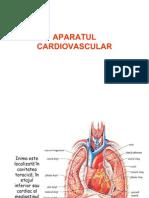 Aparat Cardiovascular