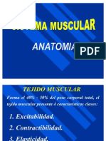 Sistema Muscular Rogers