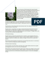 Water Hyacinth Oil