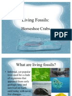 Horseshoe Crabs Report