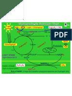 2.2.4 Photosynthesis Summary Power Point