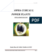 Jatropha Curcas l Power Plants Jatrofuels