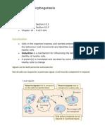 Induction and Morphogenesis