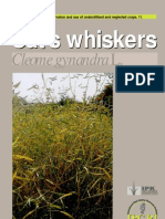 Promoting the Conservation and Use of Under Utilized and Neglected Crops. 11 - Cat's Whiskers