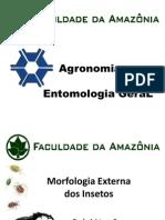 Morfologia Externa
