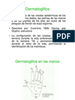 4. Dermatoglifos