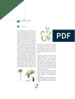 Flora y fauna básica de la Sierra de Guadarrama
