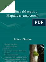 2Briofitas,Pteridofitas