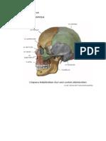 01-anatomia-02-reszletes_csonttan