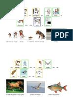 LOS ANIMALES  vida carnívoros