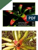 Bromeliaceae e Arecaceae