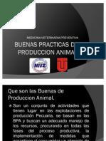 Buenas Practicas de Produccion Animal[1]