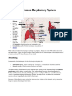 The Human Respiratory System for Ubd Demonstration