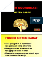 SISTEM KOORDINASI-SARAF (1)