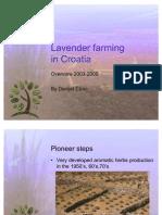 Lavender Farming in Croatia
