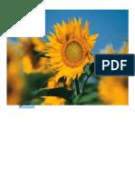 Combinar Correspondencia PDF