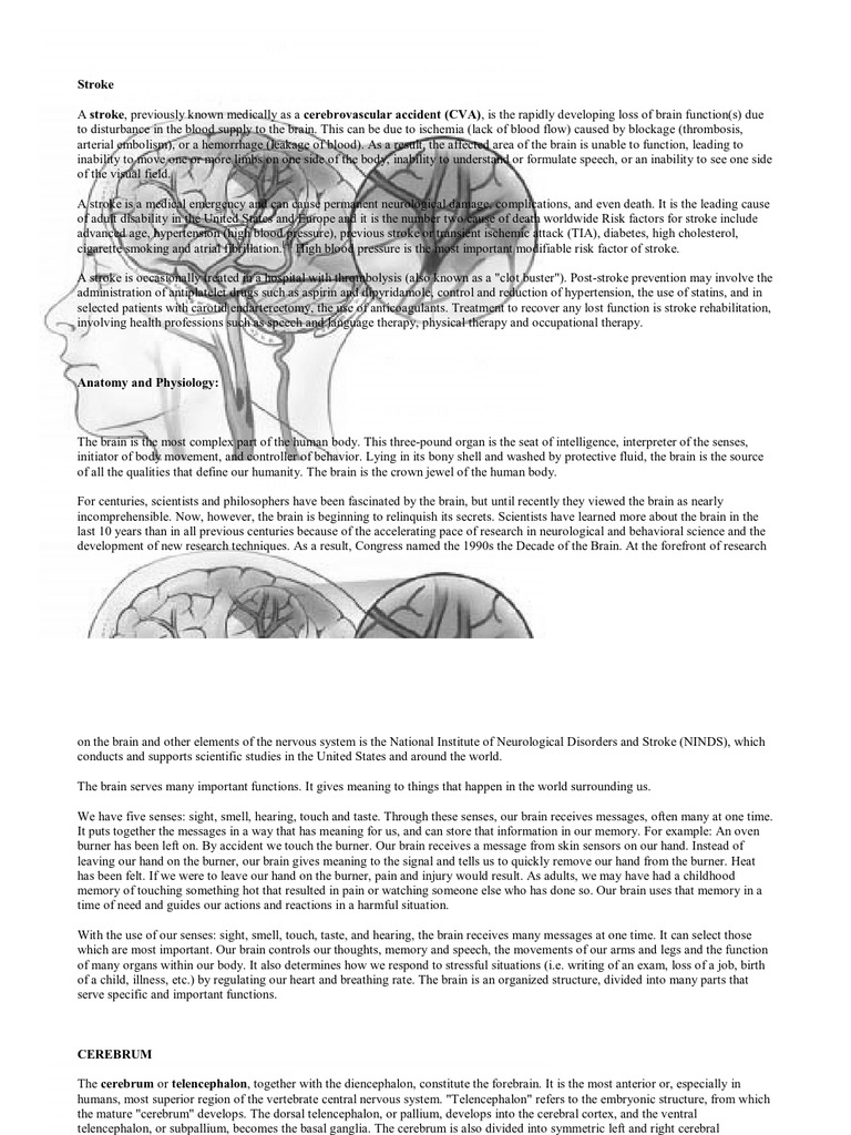 Anatomy and Physiology | Cerebrum | Stroke