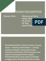 NEMATHELMINTES
