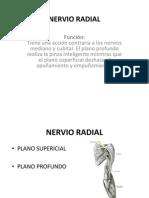 Nervio Radial.ppt Funcion