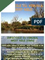 Infectiile Cu Virusul West Nile