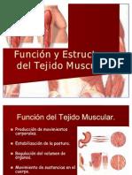 Función y Estructura del Tejido Muscular