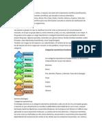 Las categorías taxonómicas