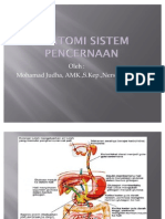 Anatomi sistem pencernaan