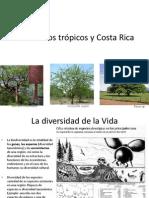 Flora de los trópicos y Costa Rica