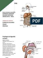 Sistema Digestório 4