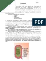 APUNTES DE ATLETISMO10