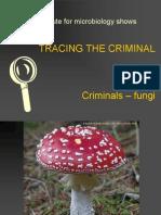 P10 - Fungi EL