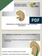 Desarrollo Embrionario Del Sist. Urinario 2012