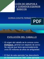 evolucionyanatomia CONDUCCIÓN DE GRUPOS A CABALLOS Y CUIDADOS EQUINOS BÁSICOS