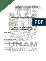 anatomia PRACTICA 8