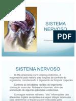 Sistema_nervoso[1]