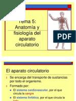 aparato_circulatorio guay