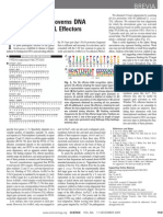 A Simple Cipher Governs DNA Recognition by TAL Effectors