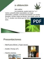 02marihuana-110623152726-phpapp01