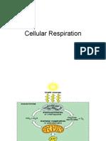 Cellular Respiration CP